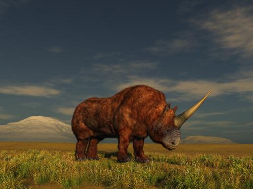 Rinoceronte unicornio