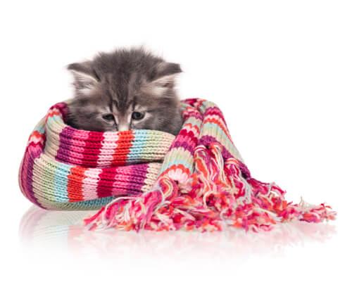 Síntomas de frío en gatos