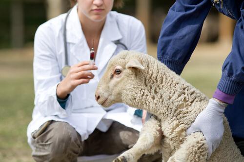 Zooveca: antiparasitario para animales