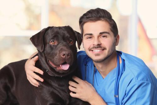 A cuánto ascienden las cuentas veterinarias