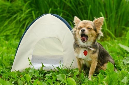 Acampada con perros