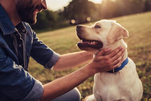 4 способа показать любовь домашнему животному