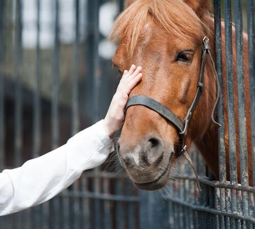 Adoptar un caballo: lo que necesitas saber