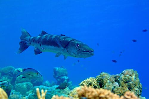 Existen muchas curiosidades del mundo marino por descubrir aún.
