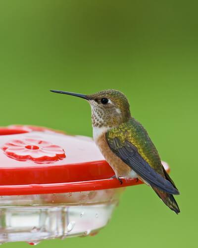 Bebederos para colibríes