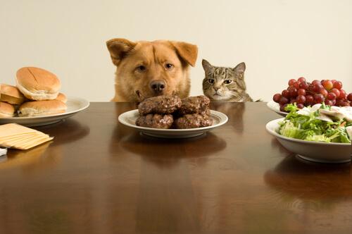 ¿Qué es la bi-nutrición en las mascotas?