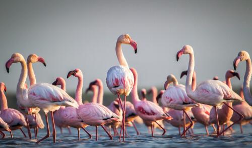 Biodiversidad de aves en el mundo