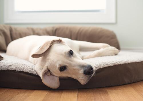 3 diferentes tipos de camas para perros