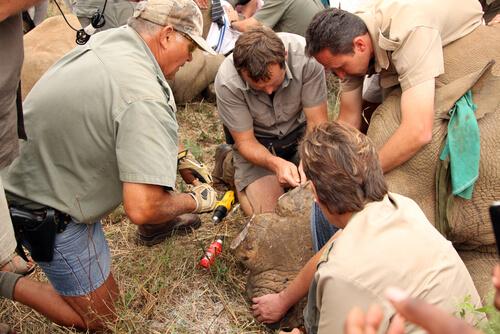 Caza furtiva del rinoceronte