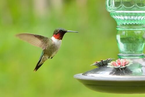 ¿No hay colibríes en tus comederos? 4 tips para solucionarlo