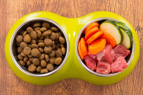 Comida casera o comercial para perros