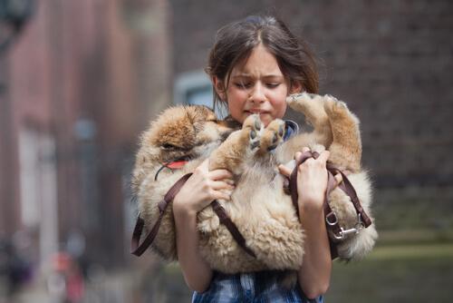 Противопаразитарные ошейники для собак: лучшие на рынке
