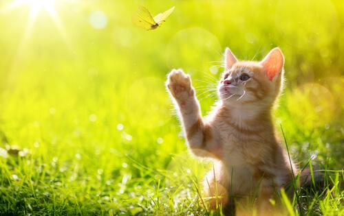 ¿Debería mi gato pasear libre durante la cuarentena?