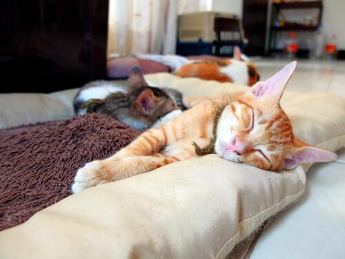 ¿Cómo colocar las cosas de tu gato en casa?