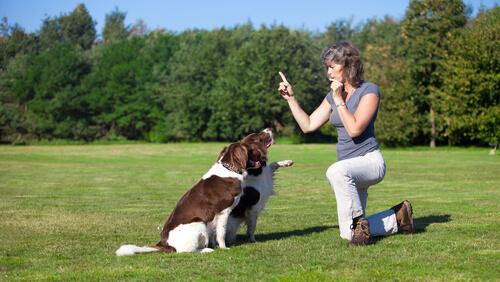 Cómo entrenar a un perro con silbato
