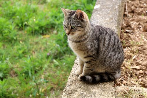 Как держать кошек в безопасности на улице