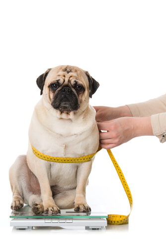 Cómo medir a un perro