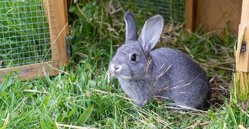 La conejera, el hogar ideal para tu conejo