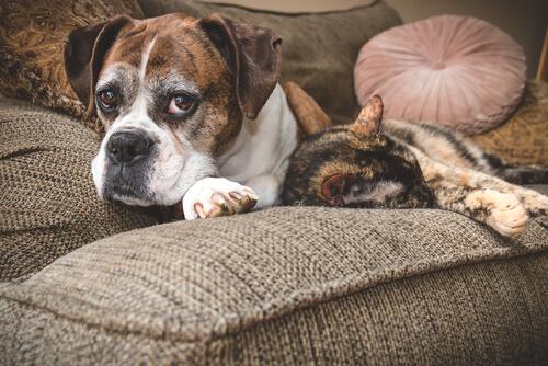 Los mejores consejos para cuidar a los perros y gatos mayores
