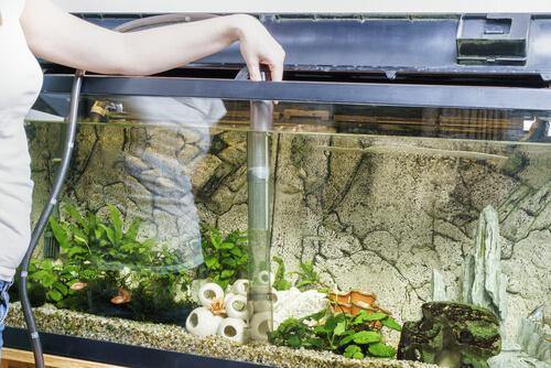 Consejos para la limpieza del acuario