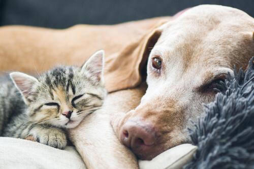 Convivencia con perros y gatos mayores