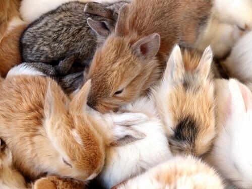 Crías de conejos