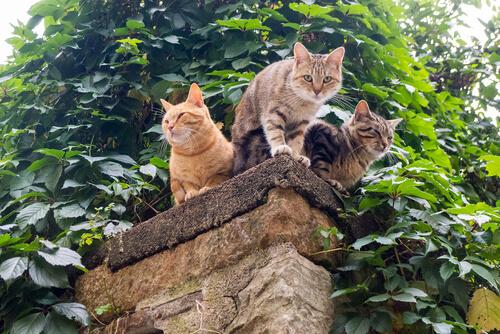 ¿Deberían los gatos salir de casa?