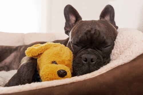 Descanso en un perro