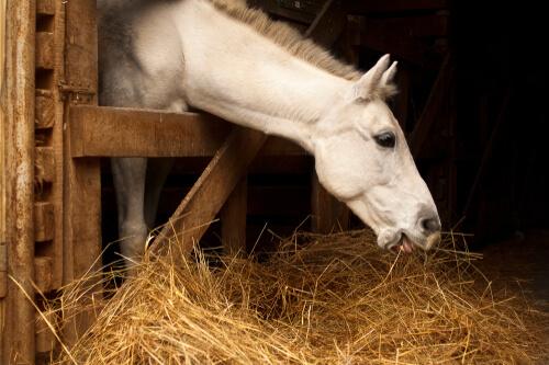 Beneficios de una dieta adecuada para los caballos