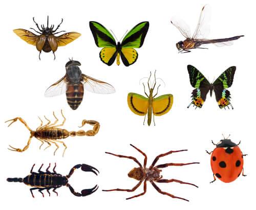 Diferencias entre insectos y arácnidos