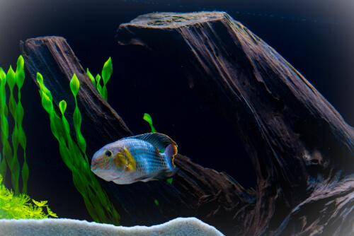 Enfermedad en un pez