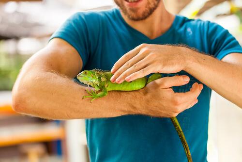 Enfermedades que pueden transmitir los reptiles: salmonelosis