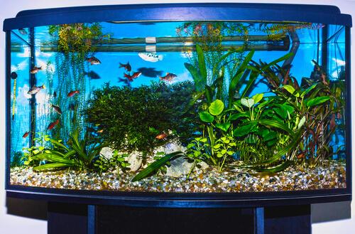 ¿Cómo enfriar tu acuario durante el verano?