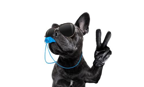 Дрессируйте свою собаку с помощью техники свистка