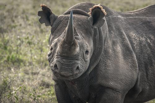 5 especies al borde de la extinción