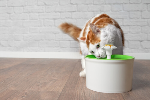 Fuente de agua del gato