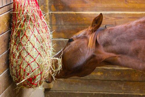 Heno para caballos