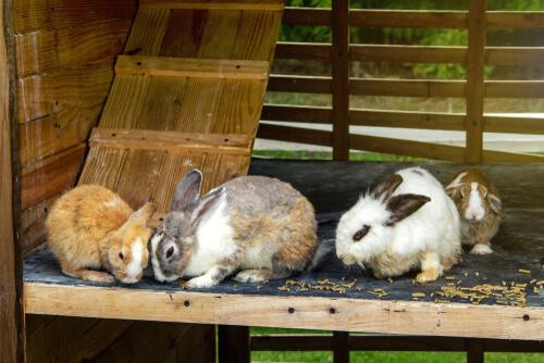 Hogar para conejos