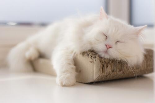 Как бороться с инфекциями мочевых путей кошек