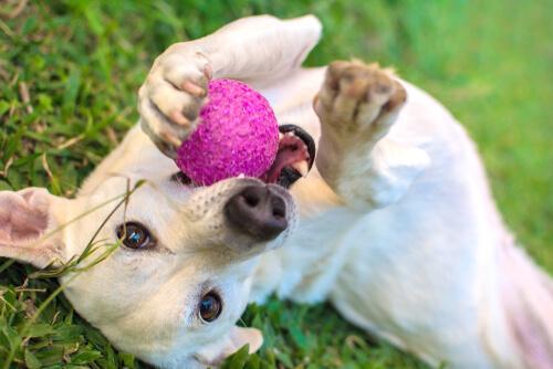 Los 5 juguetes que más les gustan a los perros