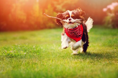 Juguetes seguros para tu perro
