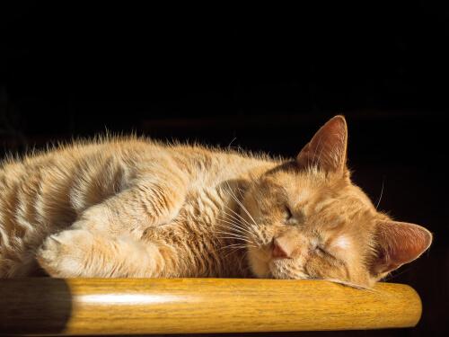 Этапы сна у кошек