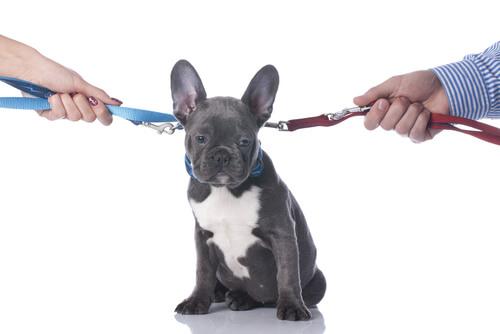 Separación o divorcio: ¿qué futuro tiene mi mascota?