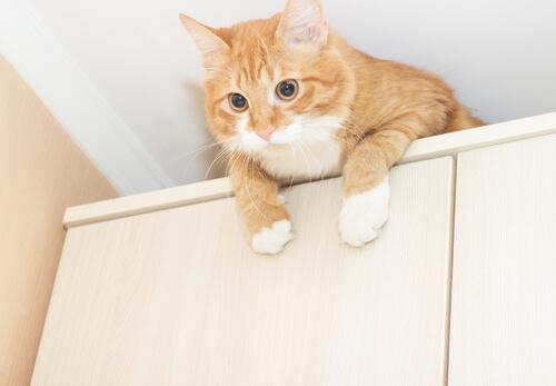 Medidas preventivas para proteger a tu gato
