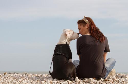 El olfato del perro utilizado para detectar el cáncer de mama