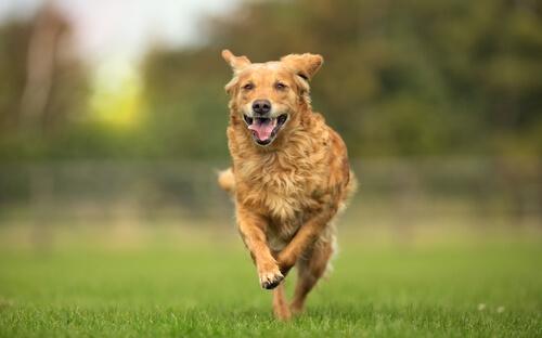 Osteopatía en mascotas