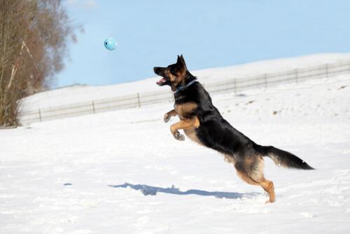 Osteopatía en perros
