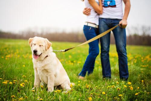 Pareja paseando perro