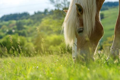 Pasto para caballos