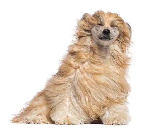 Pelaje del perro